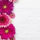 Gerbera flowers - PhotoDune Item for Sale