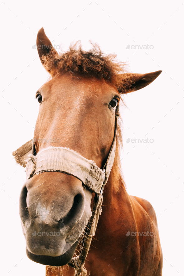 Funny Closeup Of Horse - Wide Angle - Stock Photo - Images