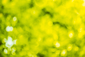 Blurred Abstract Bokeh Natural Green Background Of Summer Foliag - PhotoDune Item for Sale