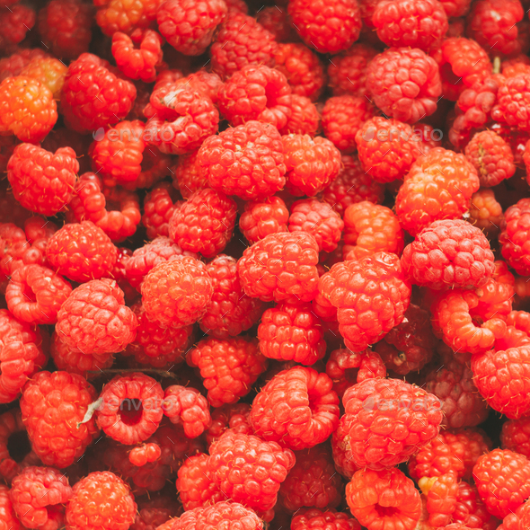Fresh Red Sweet Berries Raspberries Background. - Stock Photo - Images