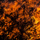 Wild fire burning leaves - PhotoDune Item for Sale