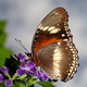 Feeding butterfly on a flower - PhotoDune Item for Sale