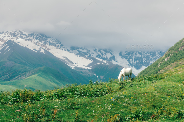 White horse in high mountains - Stock Photo - Images