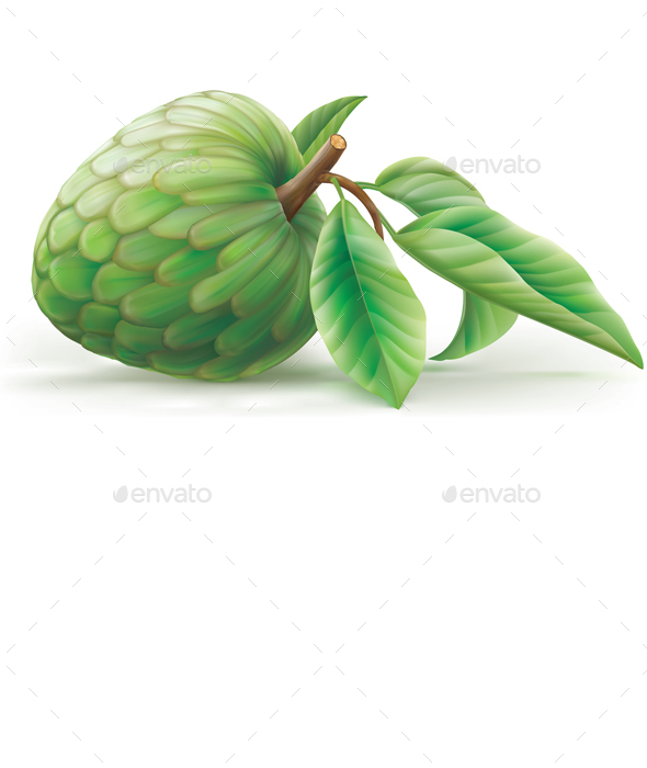 Annona Cherimola Fruit with Leaves - Food Objects