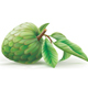 Annona Cherimola Fruit with Leaves - GraphicRiver Item for Sale