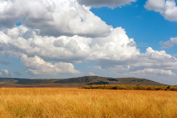 Savannah landscape in the National park of Kenya - Stock Photo - Images