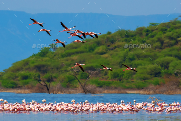 Flamingos - Stock Photo - Images