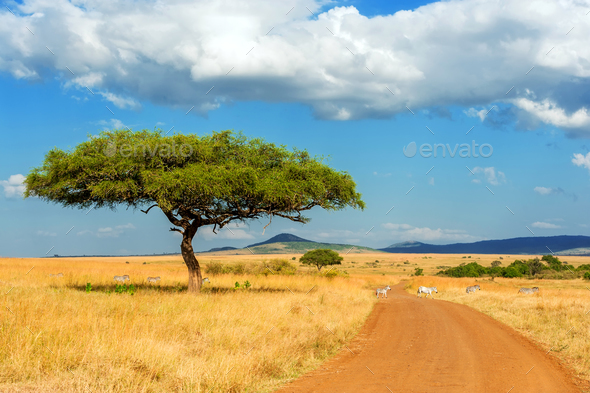 Landscape with nobody tree in Africa - Stock Photo - Images
