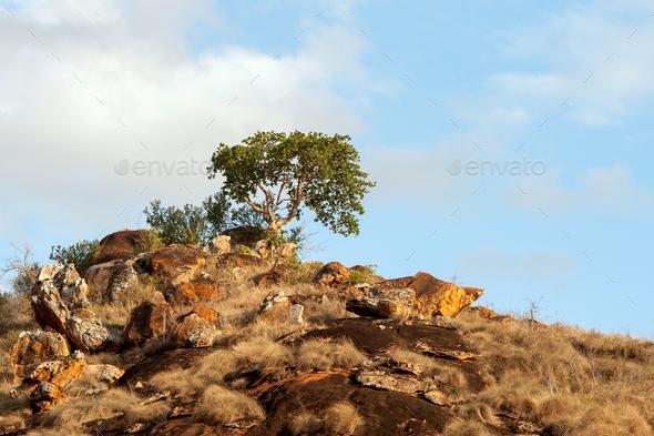 Savannah landscape in the National park of Kenya - Stock Photo - Images
