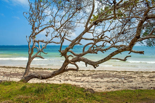 Beach and tropical ocean - Stock Photo - Images