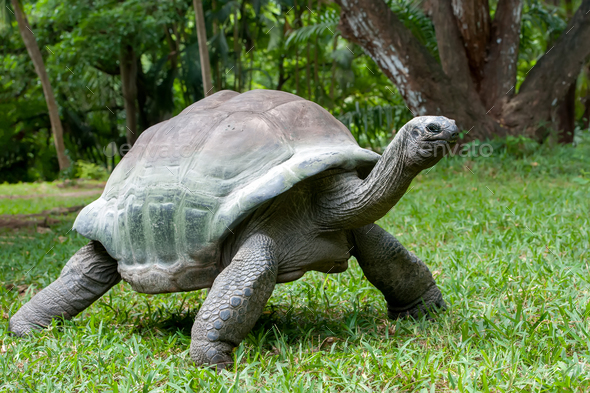 Turtle in grass - Stock Photo - Images