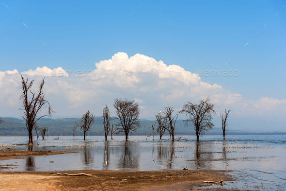 Savannah landscape with river in the National park of Kenya - Stock Photo - Images