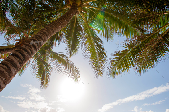 Green palm tree against blue sky and white clouds - Stock Photo - Images