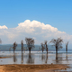 Savannah landscape with river in the National park of Kenya - PhotoDune Item for Sale