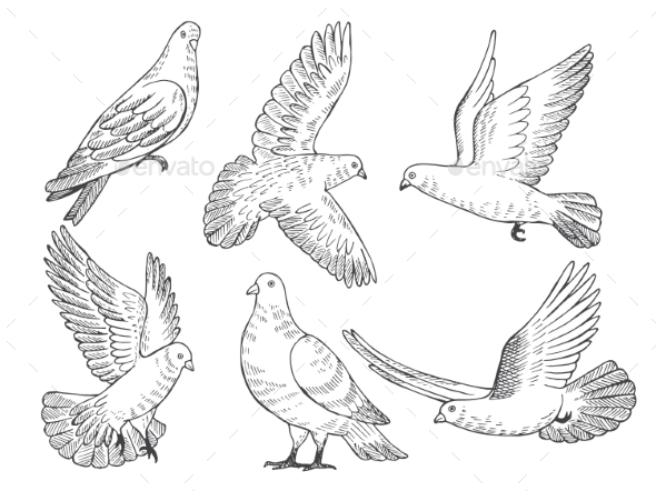 Illustrations Set of Pigeons - Animals Characters