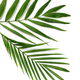 palm leaves - PhotoDune Item for Sale