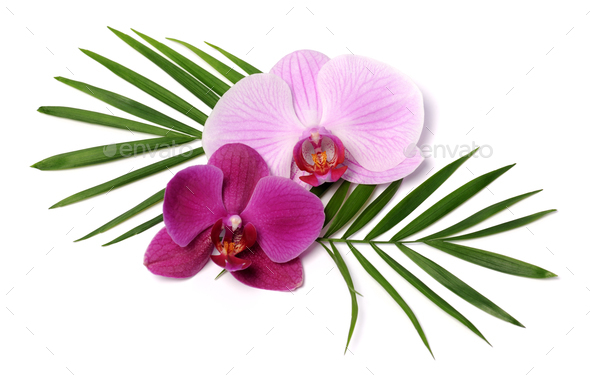 beautiful orchids - Stock Photo - Images