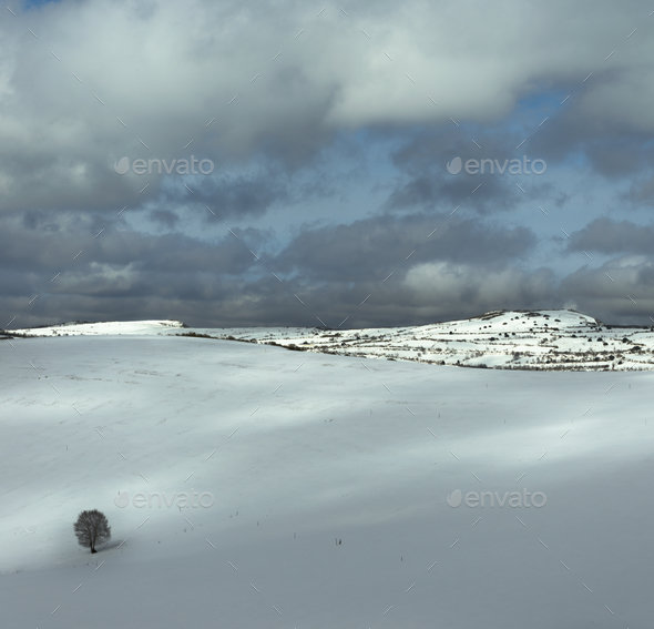 Lonely tree in a snowy meadow - Stock Photo - Images