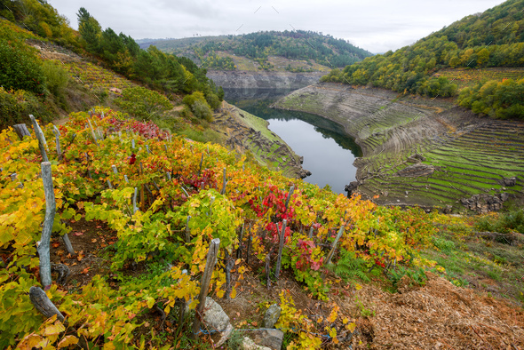 Ribeira Sacra and its hillsides covered with vineyards - Stock Photo - Images