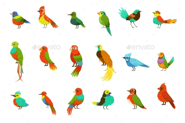 Exotic Birds From Jungle Rain Forest Set - Animals Characters
