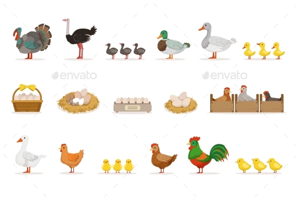 Farm Birds Grown For Meat and For Laying Eggs - Animals Characters
