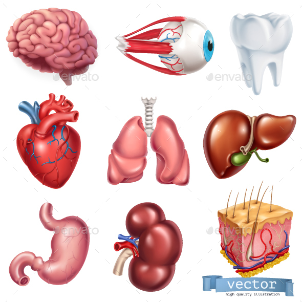 Medicine Internal Organs By Allevinatis Graphicriver