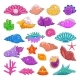 Sea Shells Vector Exotic Marine Cartoon Clam-Shell