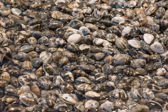 Fresh clams on the fish market - Stock Photo - Images
