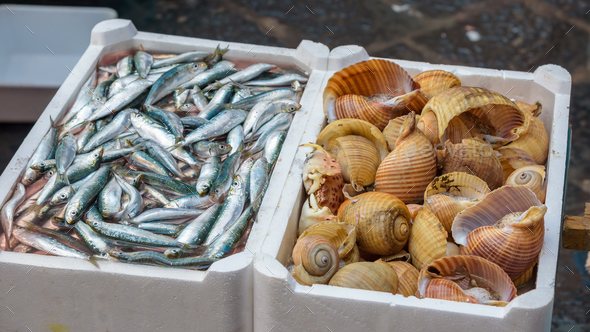 Sprat and sea snails on the fish market - Stock Photo - Images