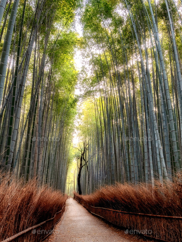 Bamboo Forest - Stock Photo - Images