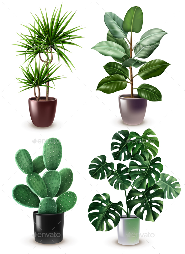 Realistic Houseplant Icon Set - Flowers & Plants Nature
