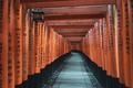 Fushimi Inari Shrine - PhotoDune Item for Sale