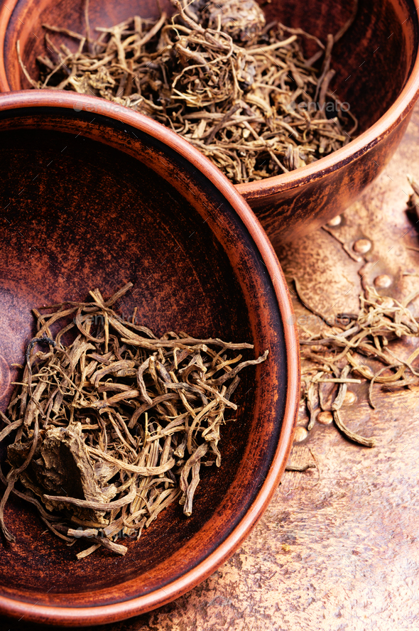 Roots and rhizomes Valerian officinalis - Stock Photo - Images