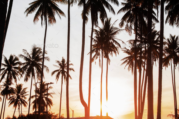 Coconut tree with sunrise - Stock Photo - Images