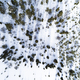 Aerial drone view of idyllic winter landscape. Evergreen snow covered forest from the top, sun rise. - PhotoDune Item for Sale