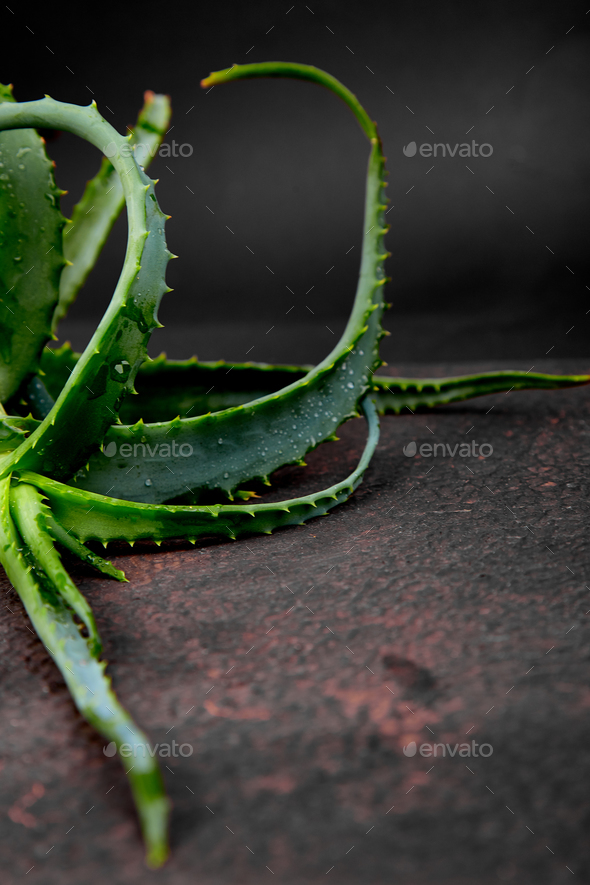 Aloe vera on brown background. - Stock Photo - Images