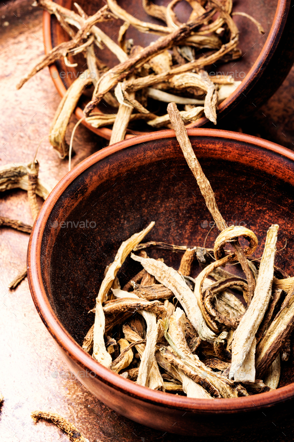 Medicinal root inula - Stock Photo - Images