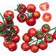 Regina tomatoes on the vine - PhotoDune Item for Sale