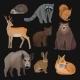 Wild Northern Forest Animals Set