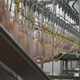 Chicken Cutting Plant - VideoHive Item for Sale