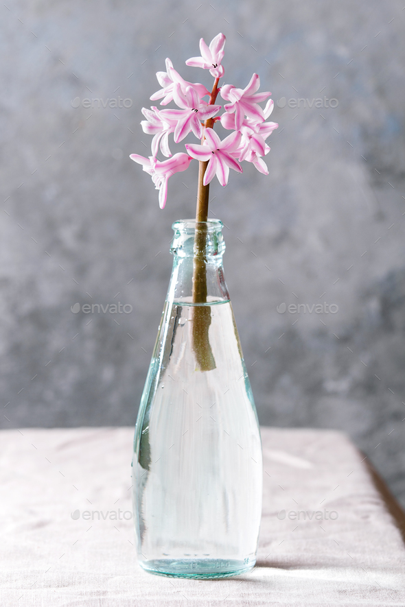 Spring pink hyacinth - Stock Photo - Images