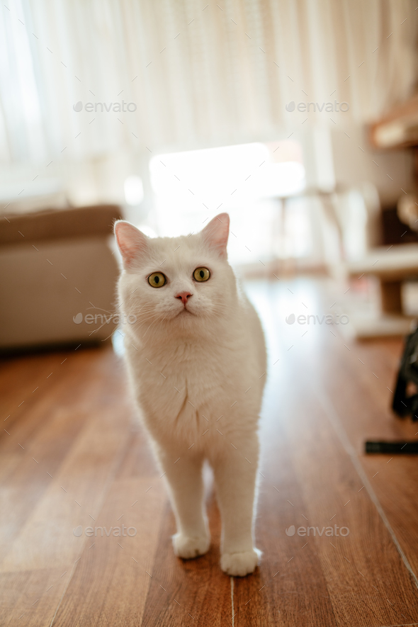 Thoughtful Cat - Stock Photo - Images