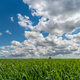 Grain field and cloudy sky - PhotoDune Item for Sale