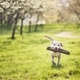 Dog is in spring nature - PhotoDune Item for Sale