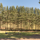 Shaded picnic area at Golden Gate in the Free State - PhotoDune Item for Sale