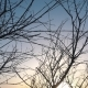 Winter Sunset and Tree without Leaves in the Wind - VideoHive Item for Sale