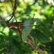 Bentota Beach, Sri Lanka: Sri Lanka Palm Squirrel - VideoHive Item for Sale
