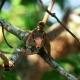 Poas Squirrel Costa Rica - VideoHive Item for Sale