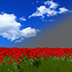 Grass And Tulips - VideoHive Item for Sale