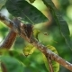 Western Striped Squirrel Climbing on Tree Branch - VideoHive Item for Sale